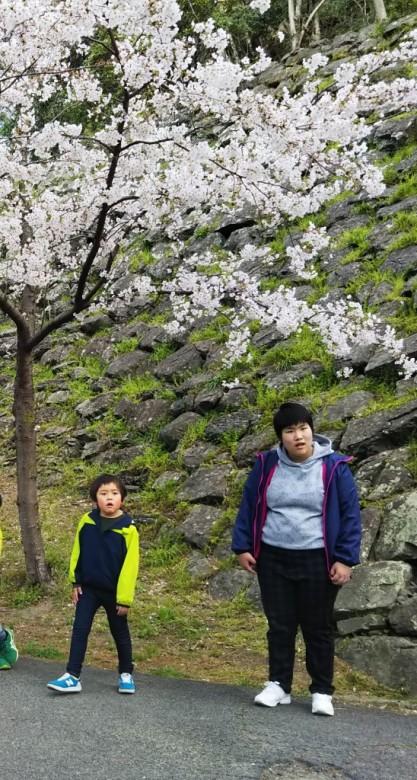 和歌山城へお花見(^^♪